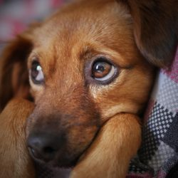 dog-3071334_1280